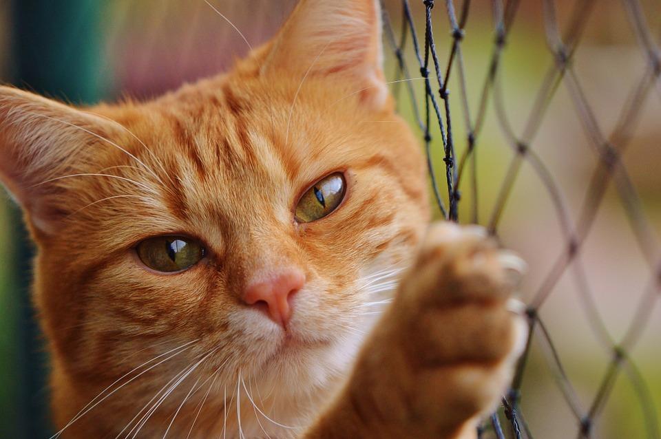 Flytte med katt og husdyr